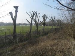 Nutters Field